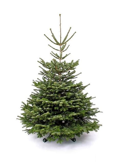 floric nordmann fir christmas tree 240 270cm house of fraser