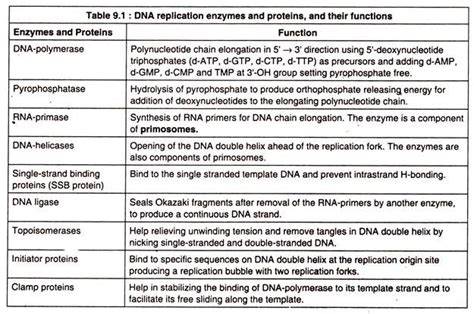 5 proteins and their functions dna replication notes on dna replication in organisms