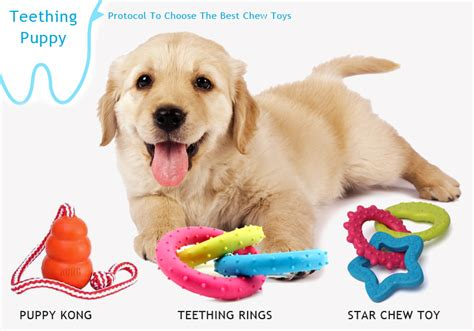 puppy teething toys best puppy chew toys for teething puppies bestvetcare