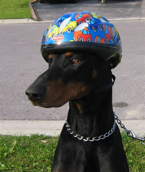 puppy helmet pin with helmet on