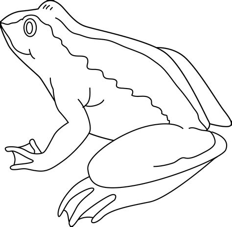 frog coloring page outline frog coloring page free clip art