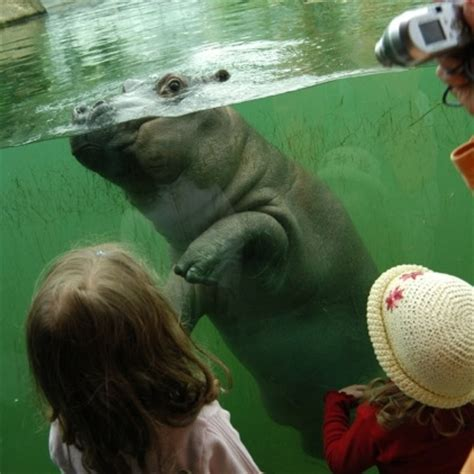 zoologischer garten to tegel airport travel to berlin zoo nature in the city discover germany