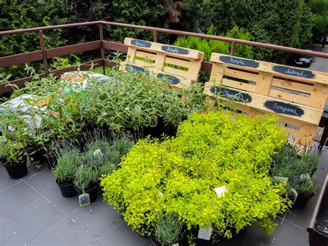 best terrace roof garden plants you should grow