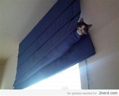 how to remove cat hair from curtains how to keep cats from breaking blinds the finishing touch