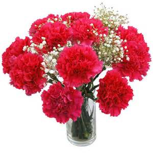 pink carnations fresh flowers free uk delivery