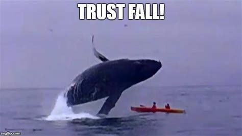 Whaling Meme - whale trust fall imgflip