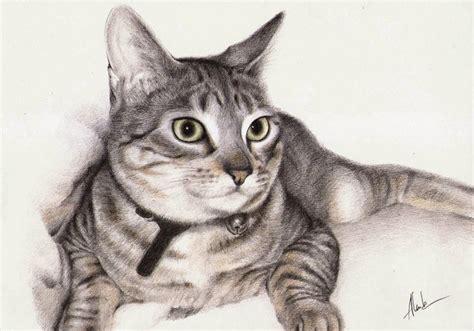 imagenes realistas de animales dibujo realista de un gato crafty bloggers pinterest