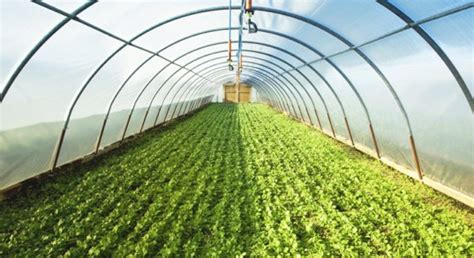 organic house greenhouse farming guide in india agrifarming in