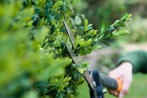 five shrubs to prune in summer gardenersworld com