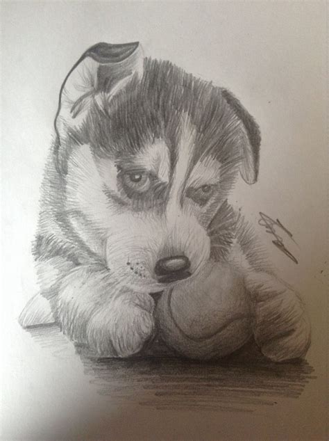 puppy sketch husky puppy sketch www pixshark images galleries with a bite