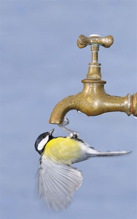 thirsty bird animal photos on creative market