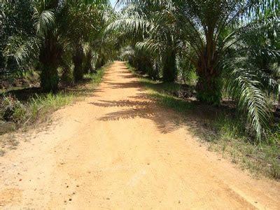 Natureday Pill Pembesar Payudara 100 Original Usa 2 tanah tanah kelapa sawit untuk dijual perak 1
