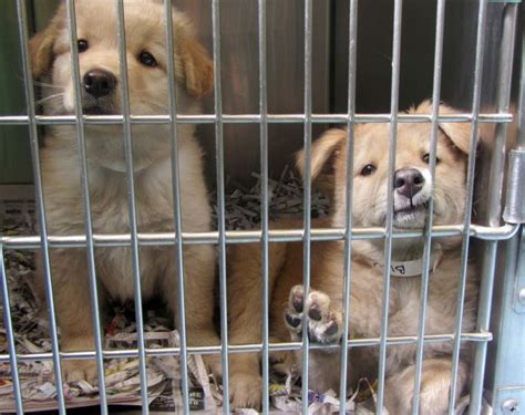 low cost euthanasia low cost spay and neuter for animals humane society
