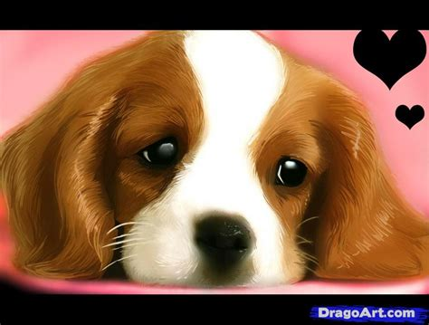 real pet dogs how to draw a realistic draw real step by step realistic drawing technique