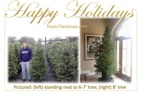 plantman com living christmas tree order request