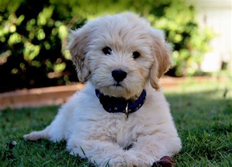 puppy puppy dachshund puppies puppies puppy