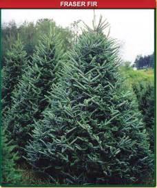 Canaan fir wisconsin tree guy