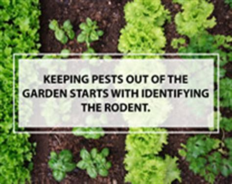 keep pests out of garden rodent tips keep your home or business rodent free