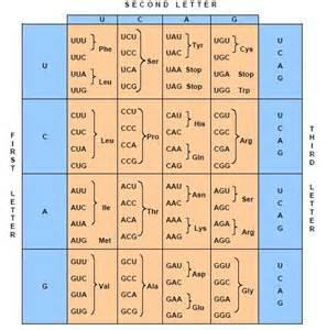 genetic code table