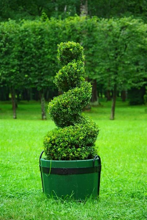 how to trim a topiary diy garden topiary projects the garden glove