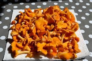 girolle ckilepatron recettes de cuisine muscl 233 es