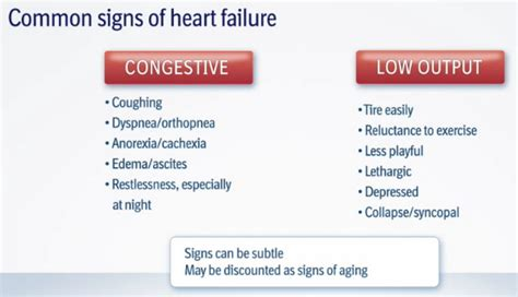 signs of congestive failure in dogs mitral valve disease and the cavalier king charles spaniel