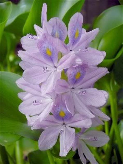 katniss flowers pinterest