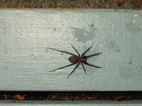 House Spider Seattle by House Spider Flickr Photo