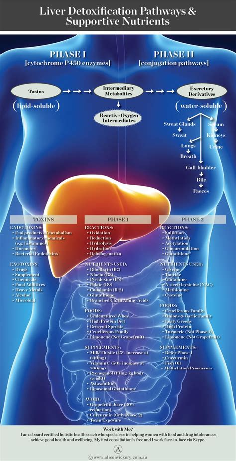 How To Detox Hetamine by 20 Best Histamine Intolerance Mast Cell Disorders Images