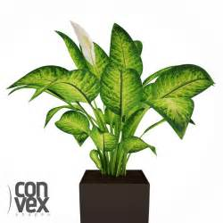 convexshapes potted plant 12