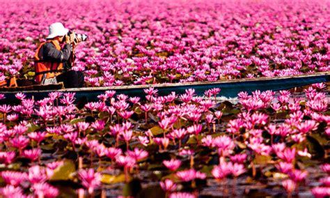 fiori thailandesi thailandia viaggilife
