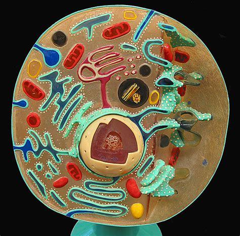 file animal cell cross section model jpg