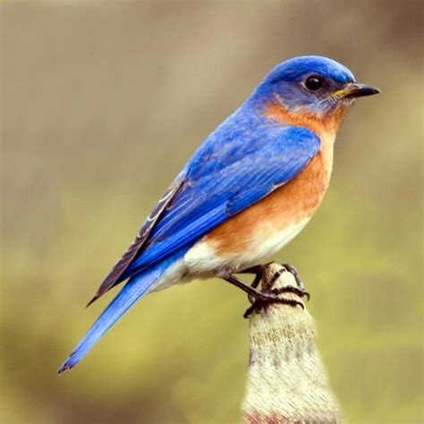 helping our bluebirds at pfeiffer nature center