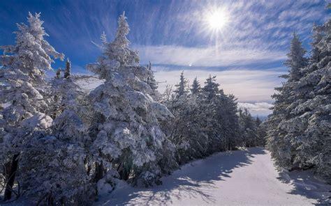 hd sun shining bright   snowy trees wallpaper