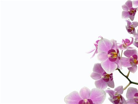 orchideen gestell nikon playtime orchid frame