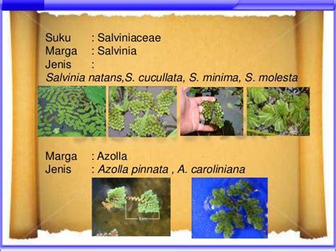 Taksonomi Tumbuhan Spermatophyta Gembong Tjitrosoepomo 1 filicinae