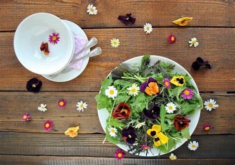 daftar edible flowers bunga  bisa dimakan bibit