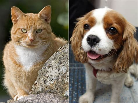 cats vs dogs cats vs dogs scientists confirm that felines are better from an evolutionary