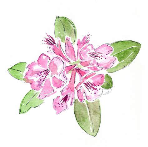 pink drawing habrumalas pink rose drawing images