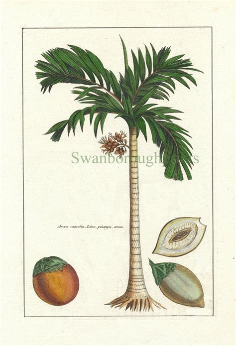 libro palms throughout the world palm tree print tropical coconut palm tree natural history print coastal beach bathroom with a