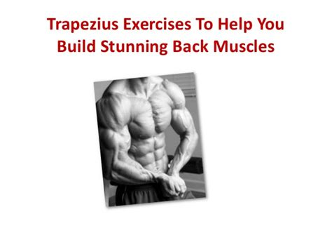 trapezius exercises to help you build stunning back muscles