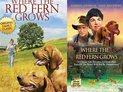 dogs in where the fern grows where the fern grows wallpapers