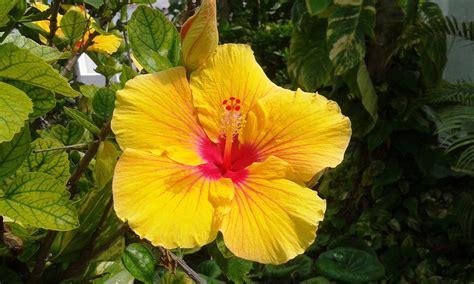 piantare fiori voglia di esotico alcuni consigli per scegliere e quando