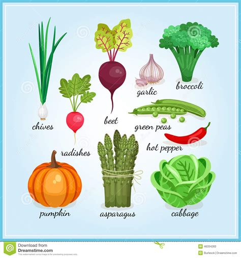 a to z vegetables names with pictures healthy fresh vegetables icons stock vector image 46334283