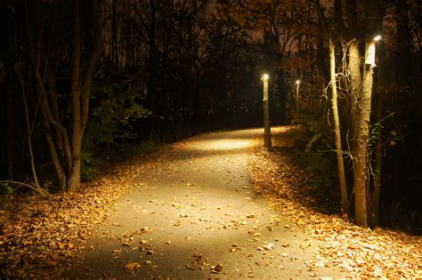 long driveway in forest his lighting