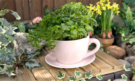 Storm In A Teacup Dont Let Snowfall Stress You Out Order Large Teacup Planter