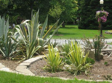 aiuole con fiori fiori e piante cura piante appartamento come creare un