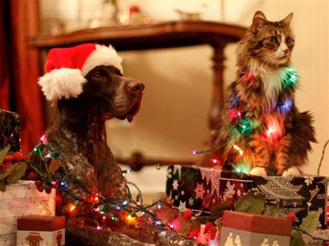 imagenes de feliz navidad con gatitos gifs animados de bonitas y traviesas mascotas navide 241 as