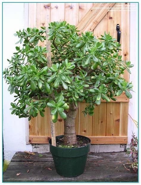 house plants for sale live house plants for sale