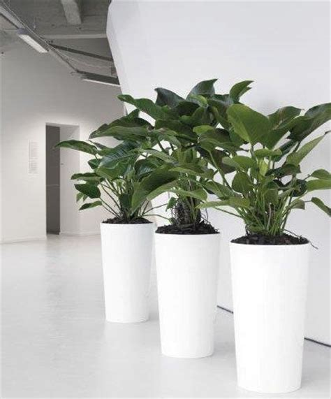 best plants for office 101 best images about office garden on pinterest office